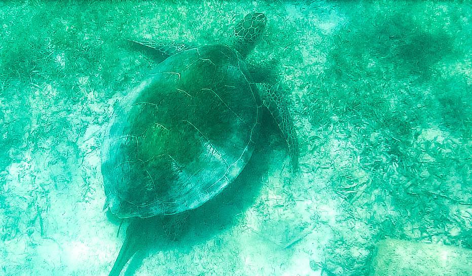 Akumal_Schildkröte