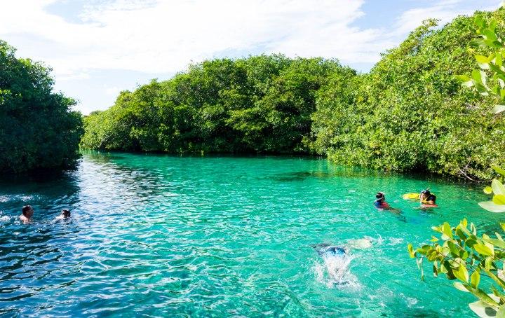 Cenote_Manatis