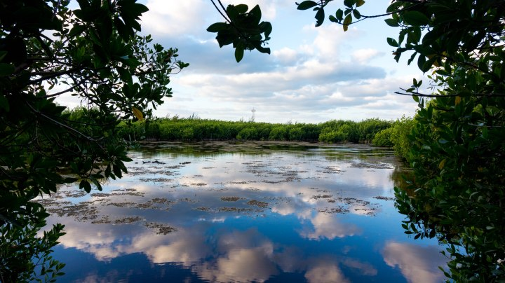 PuertoMorelos_Sumpfgebiet
