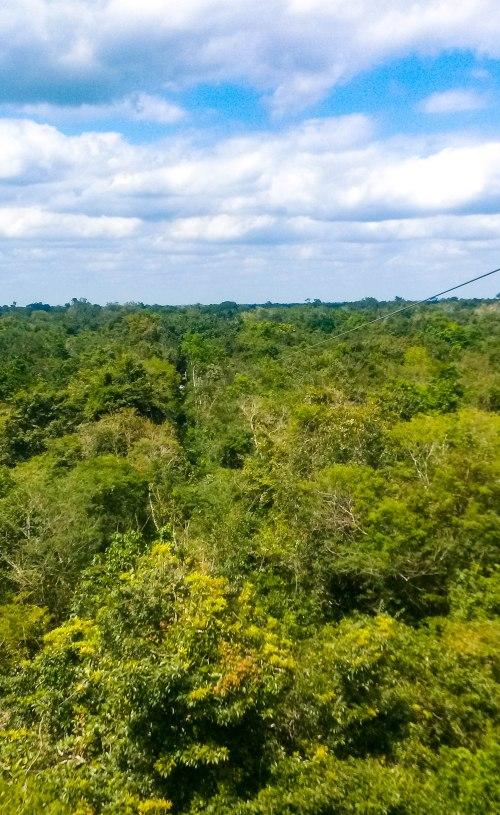 Selvatica_Dschungel