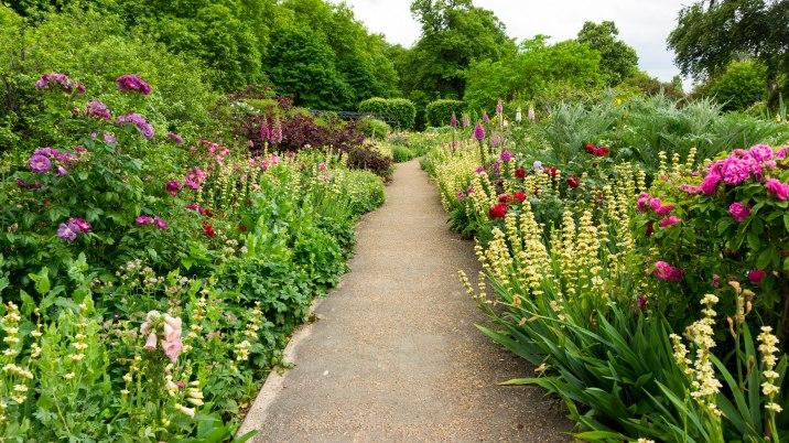 Hyde Park_Rosengarten01