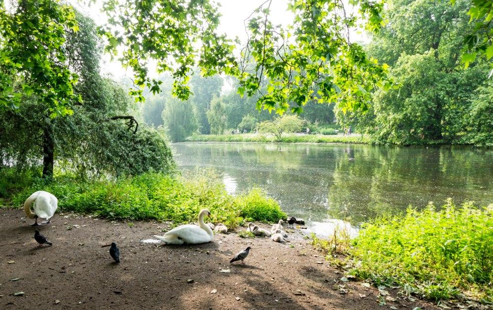 St James Park_Enten
