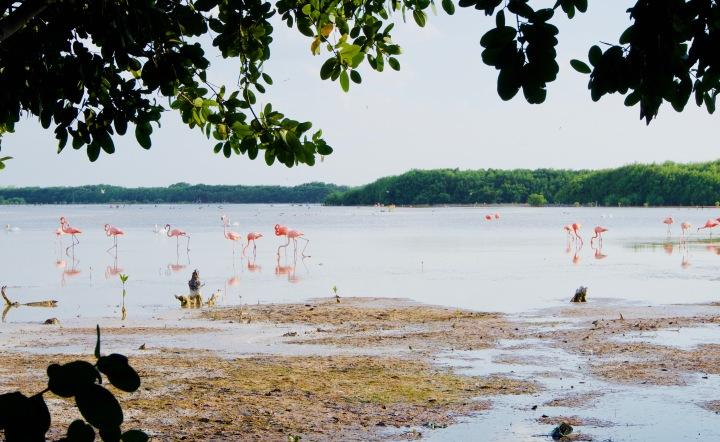 Sisal_Flamingos - 1