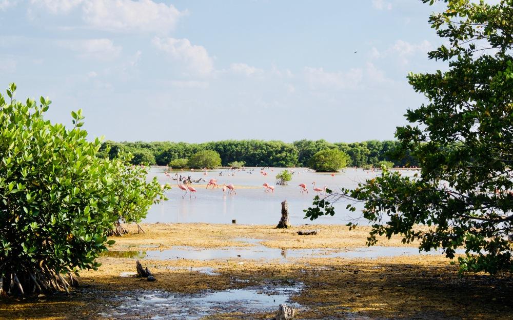 Sisal_Flamingos01 - 1