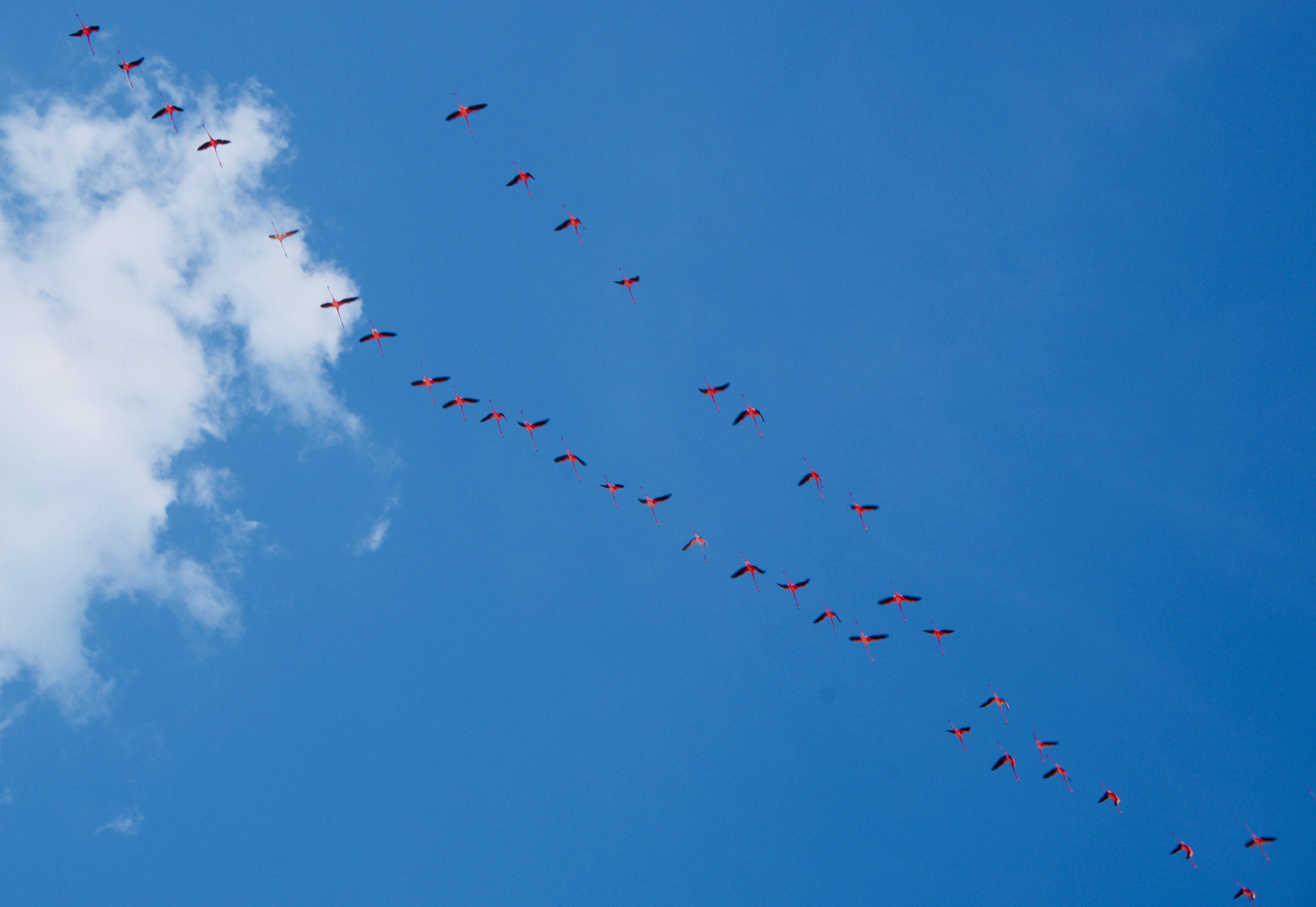 Sisal_Flamingos_Himmel - 1