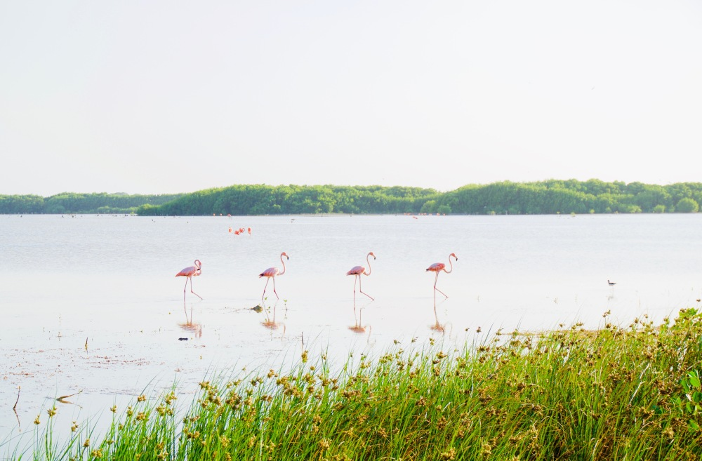 Sisal_Flamingos_Nahaufnahme - 1
