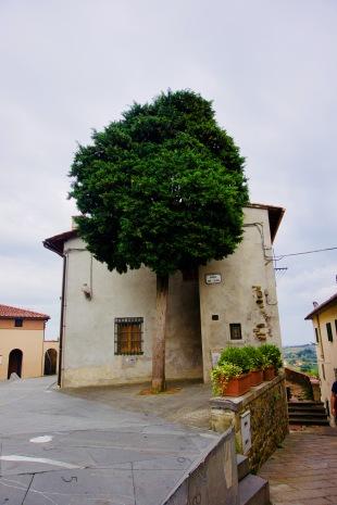 Toskana_Vinci_Haus_Baum - 1