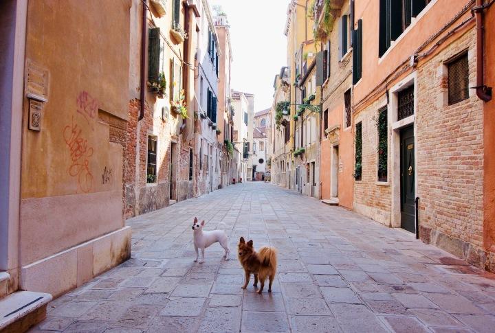 Italien_Venetien_Venedig_Hunde - 1
