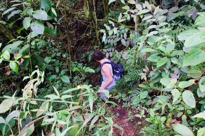 Kolumbien_Salento_Wanderung_Dschungel - 1