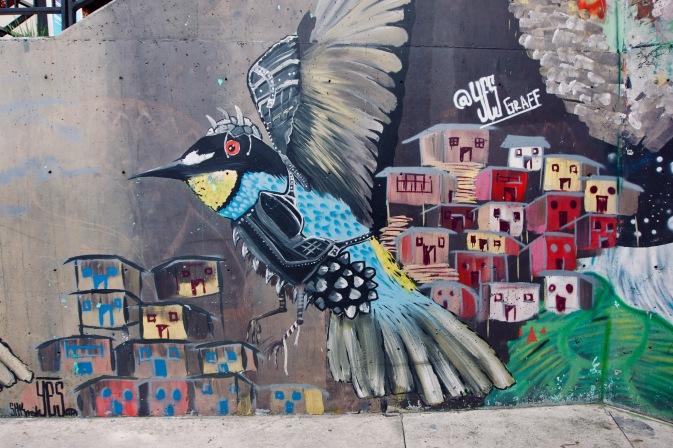 Kolumbien_Medellin_Comuna13_Vogel - 1