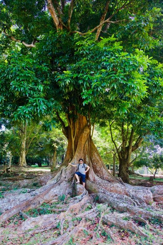 Kandy_Botanischer Garten_Baum_Patrick - 1