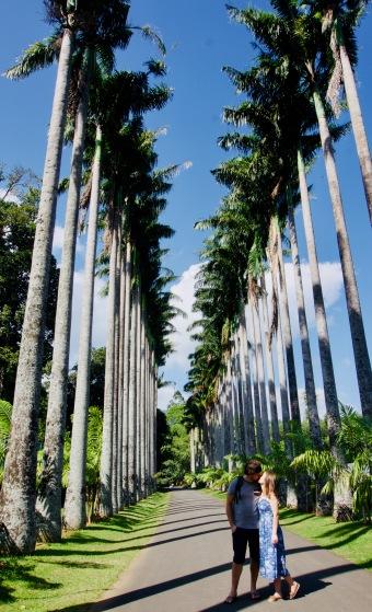 Kandy_Botanischer Garten_Palmenallee - 1