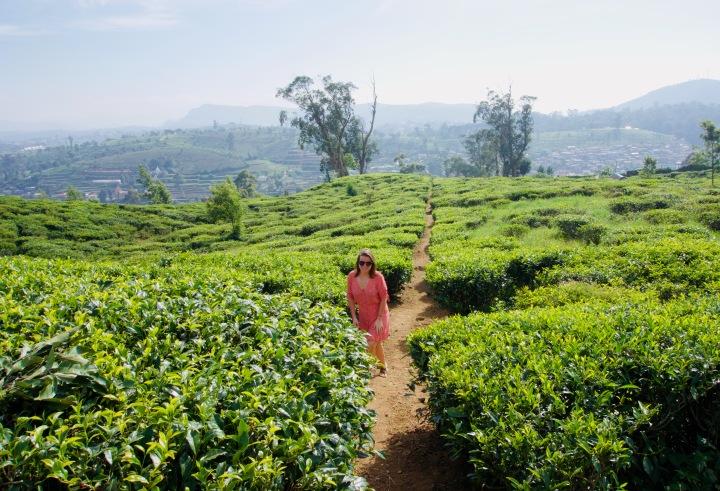Nuwara Eliya: Unterwegs imHochland