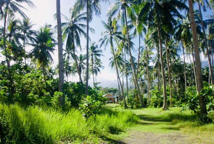 Camiguin: Vulkaninsel fürAbenteurer