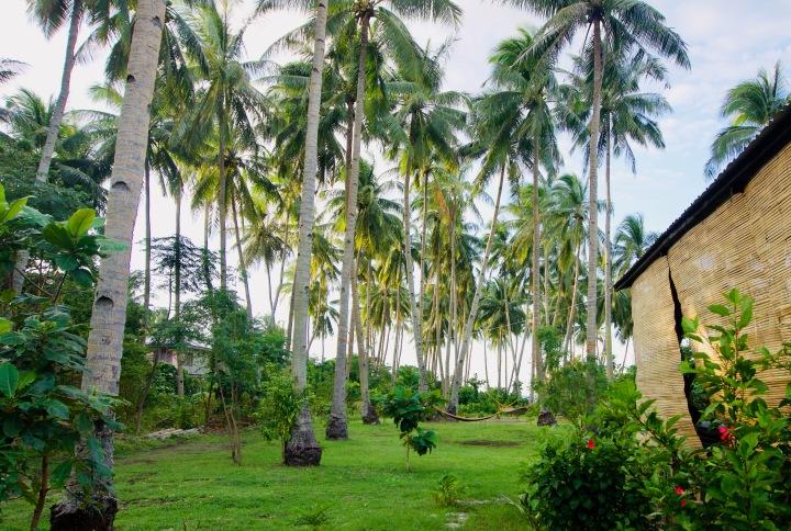 Philippinen_Camiguin_Bahandi Beach Lodge_Palmen - 1