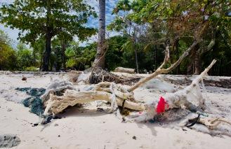 Philippinen_Camiguin_Mantique Island_Baumstamm - 1
