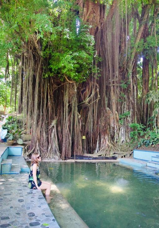 Philippinen_Siquior_Balet Tree_Karo - 1